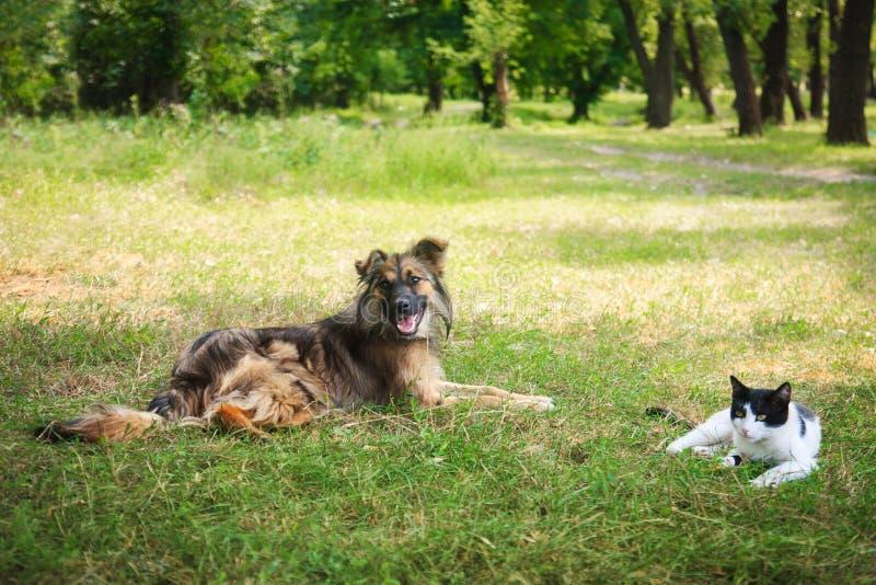 Cão e gato que encontra-se no prado foto de stock royalty free