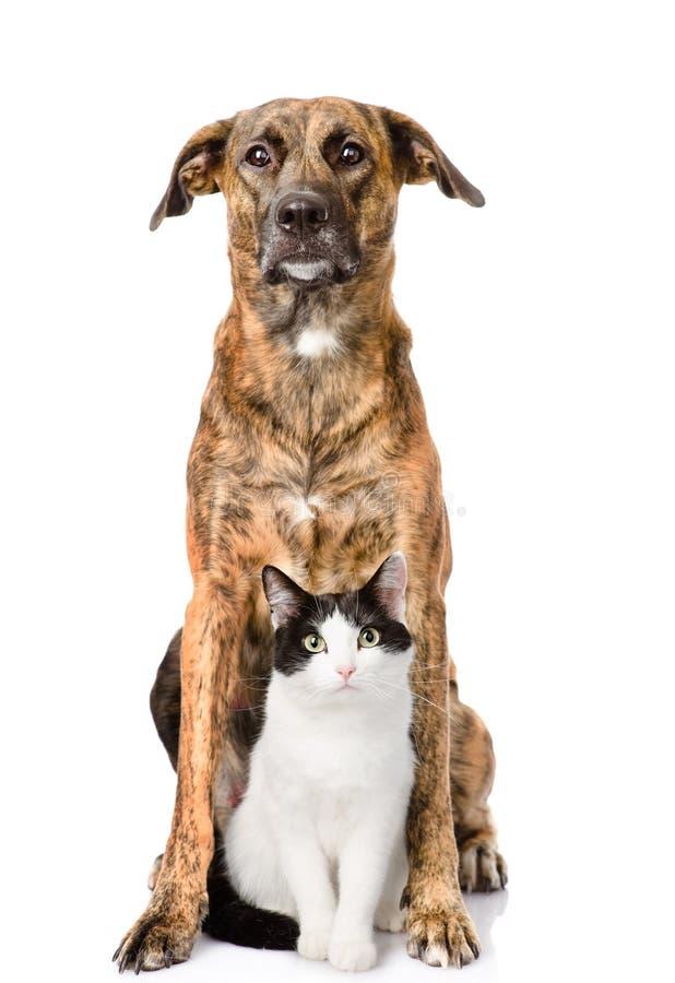 Cão e gato que senta-se na parte dianteira Isolado no fundo branco foto de stock