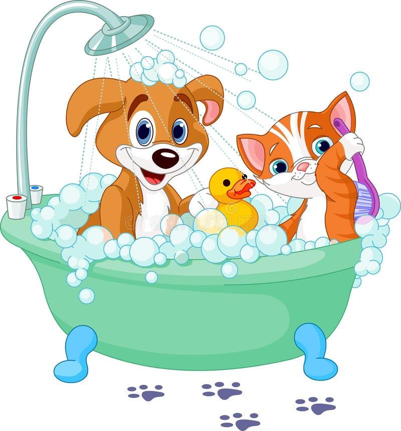 Cão e gato que têm um banho