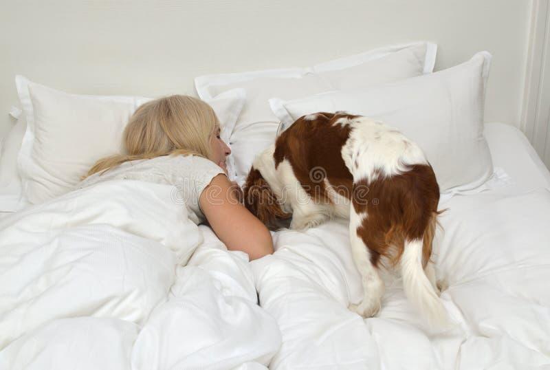 Cão e mulher imagem de stock royalty free