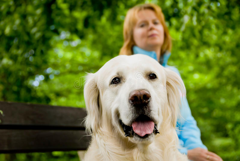 Cão e mulher na natureza fotografia de stock royalty free