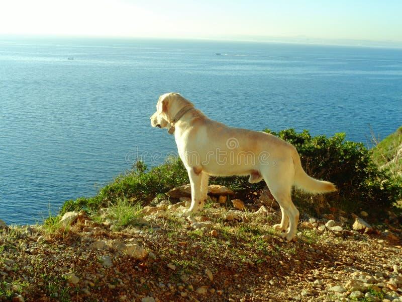 Cão e o mar imagem de stock