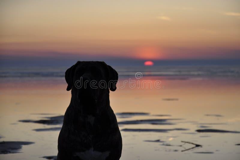 Cão e o por do sol imagem de stock royalty free