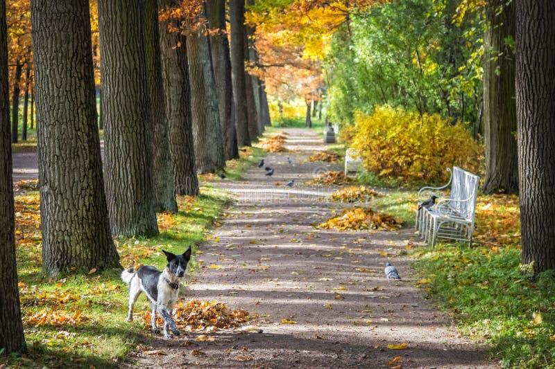 Cão e pássaros na aleia no parque fotografia de stock royalty free