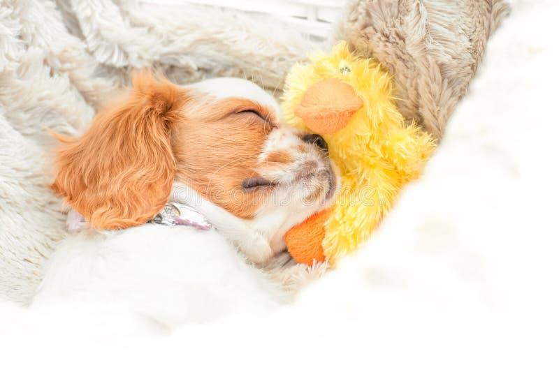 Cão e pato fotografia de stock