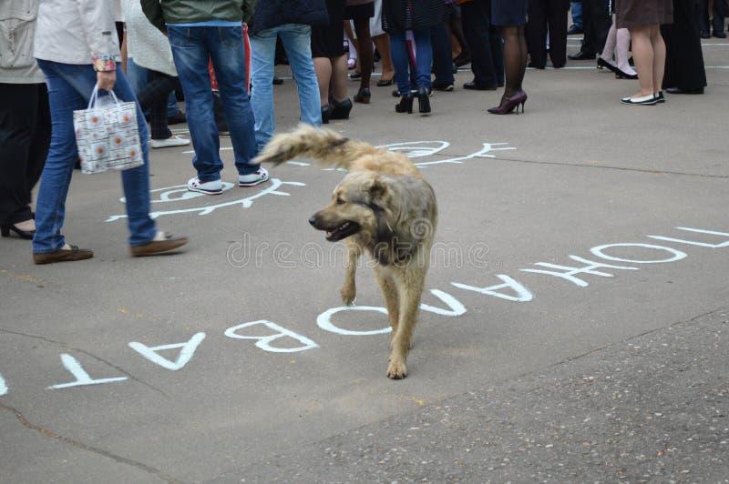 Cão e povos fotos de stock royalty free
