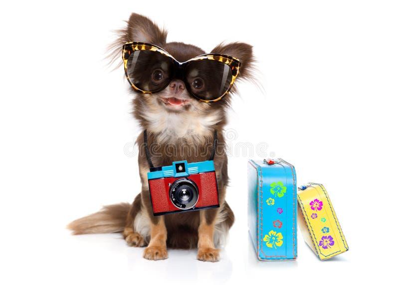 Cão em férias de verão foto de stock