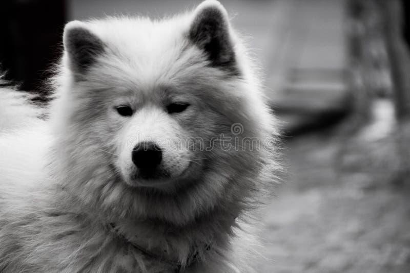 Cão em Istambul foto de stock royalty free