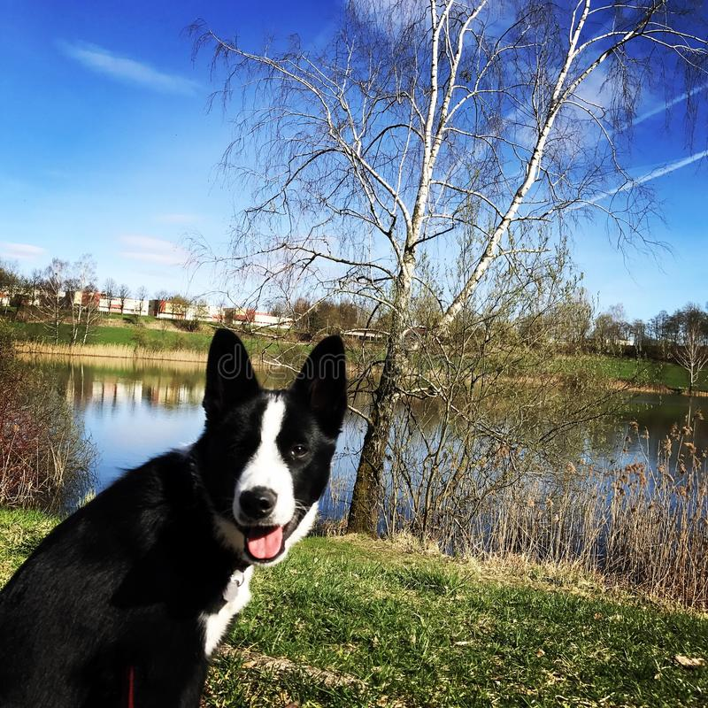 Cão em nuvens do lago fotografia de stock