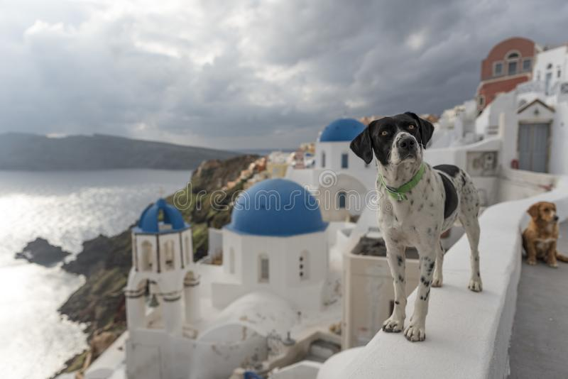 Cão em Santorini imagens de stock royalty free
