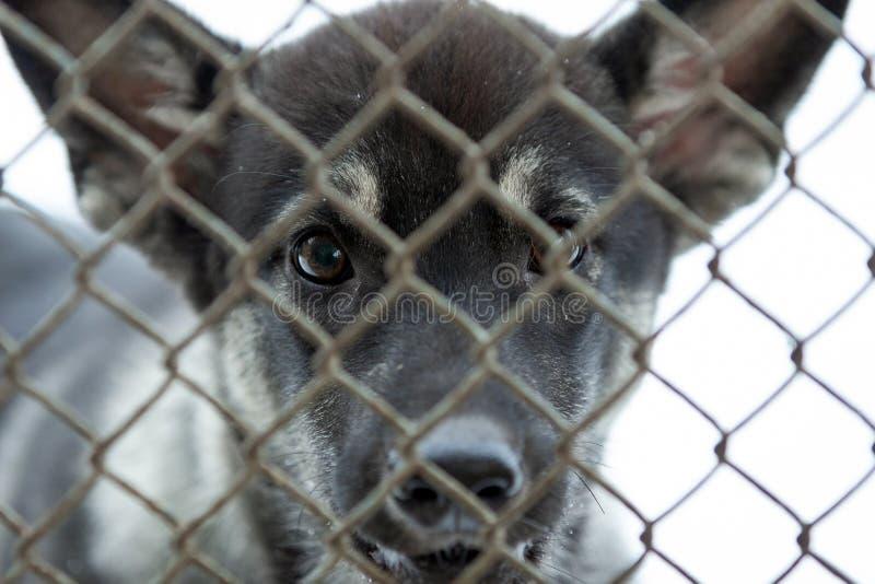 Cão em um abrigo do salvamento em uma gaiola fotos de stock royalty free