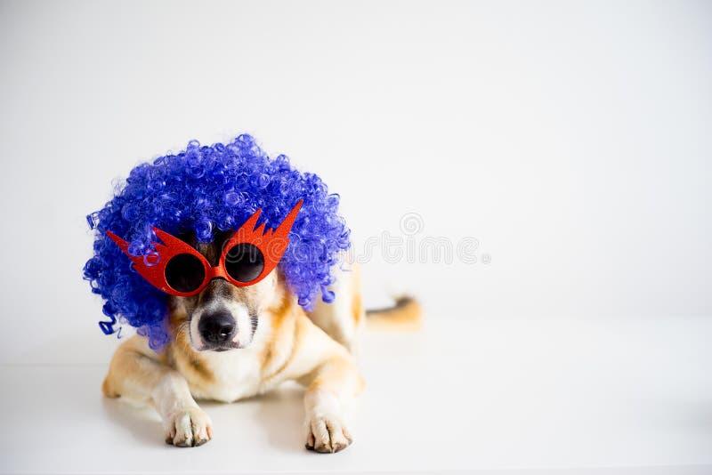 Cão em um chapéu do partido foto de stock royalty free