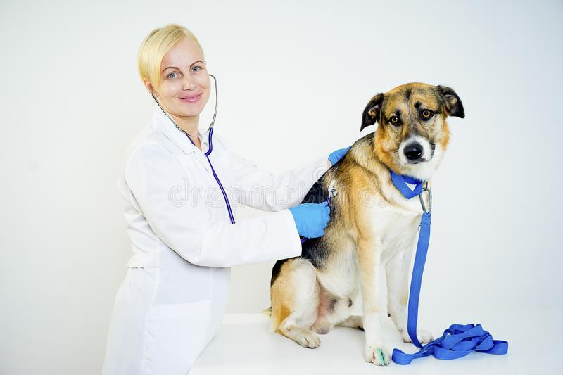Cão em um veterinário fotos de stock royalty free