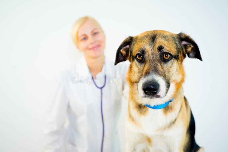 Cão em um veterinário imagem de stock