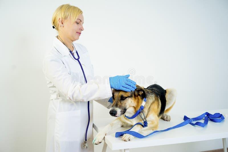 Cão em um veterinário fotografia de stock royalty free
