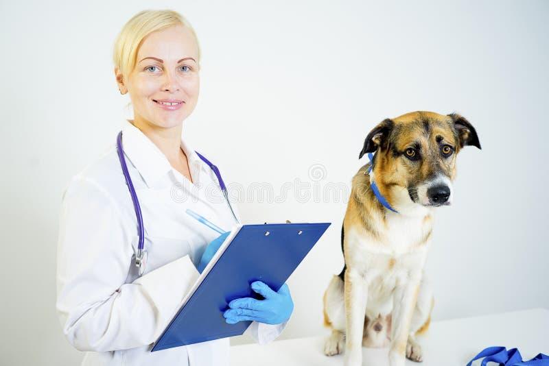 Cão em um veterinário foto de stock