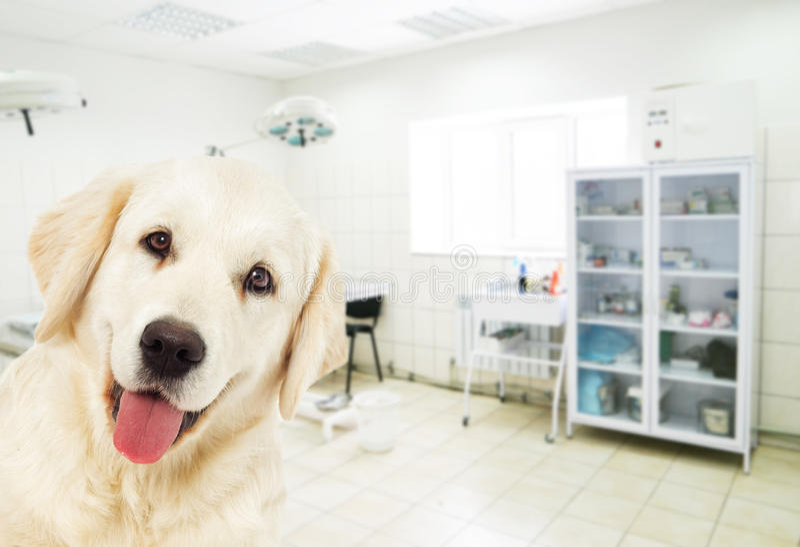 Cão em uma clínica veterinária imagens de stock royalty free