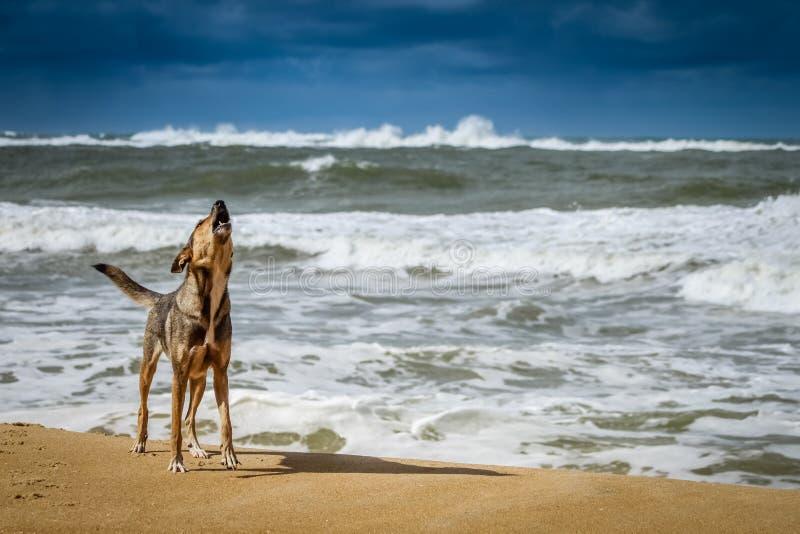 Cão em uma praia imagem de stock