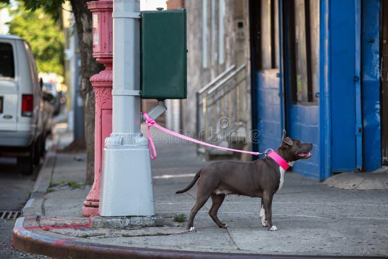 Cão em uma trela amarrada a uma lâmpada de rua imagem de stock