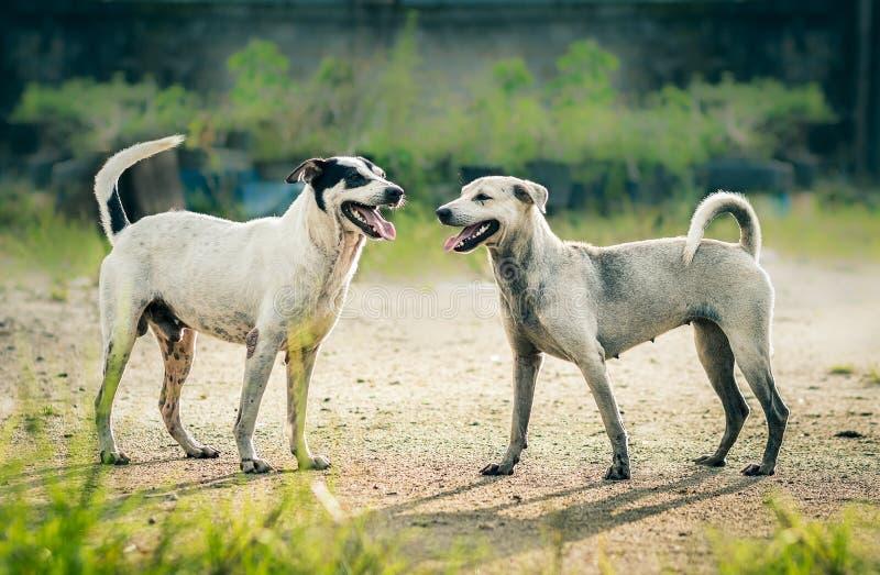 Cão encantador foto de stock