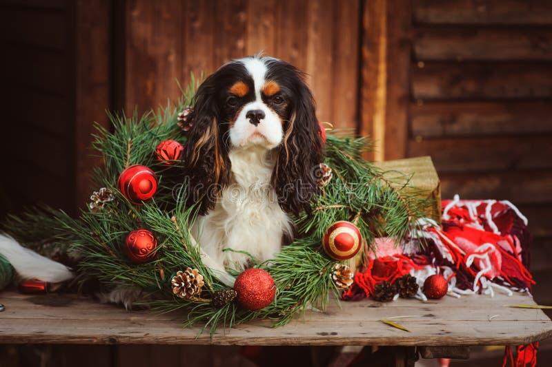 Cão engraçado bonito que comemora o Natal e o ano novo com decorações e presentes Ano chinês do cão fotos de stock