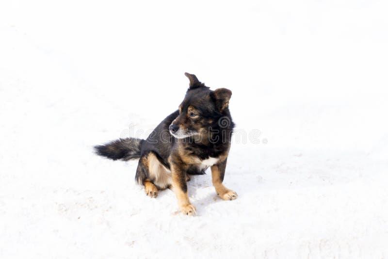 Cão engraçado da chihuahua que levanta em uma praia nos óculos de sol imagem de stock
