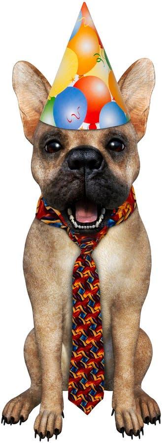 Cão engraçado do animal de partido isolado fotografia de stock