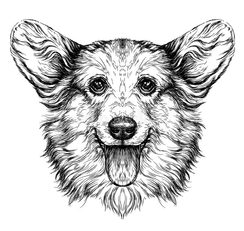 Cão engraçado do corgi de Pembroke Welsh Esboço retro do estilo do moderno do vintage do cão engraçado do corgi de Pembroke Welsh ilustração do vetor