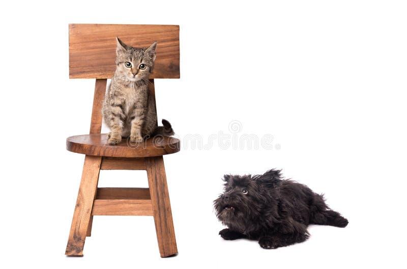 Cão engraçado e gato calmo no branco fotografia de stock royalty free