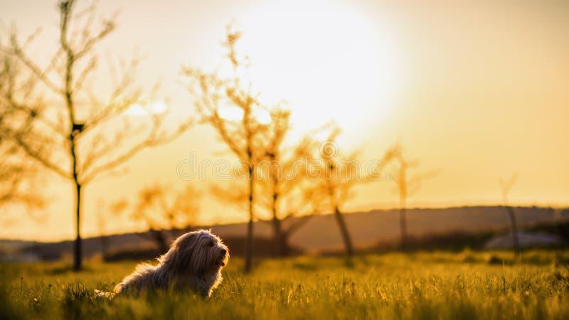 Cão engraçado no prado fotografia de stock