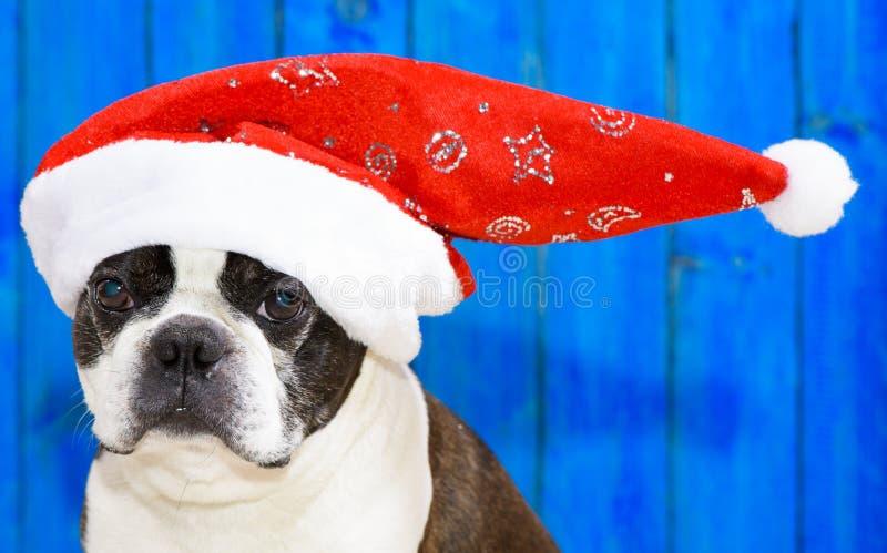 Cão engraçado no xmas imagens de stock