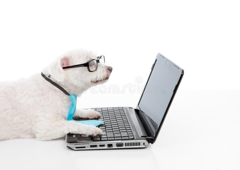 Cão esclarecido usando um portátil do computador fotos de stock