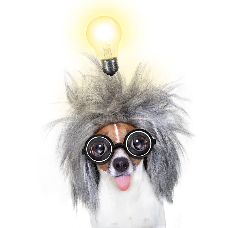 Cão esperto inteligente com uma ideia foto de stock