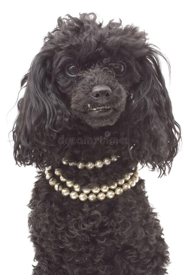 Cão extravagante fotografia de stock royalty free