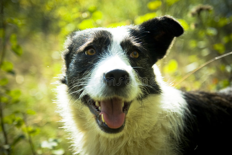 Cão feliz fotografia de stock
