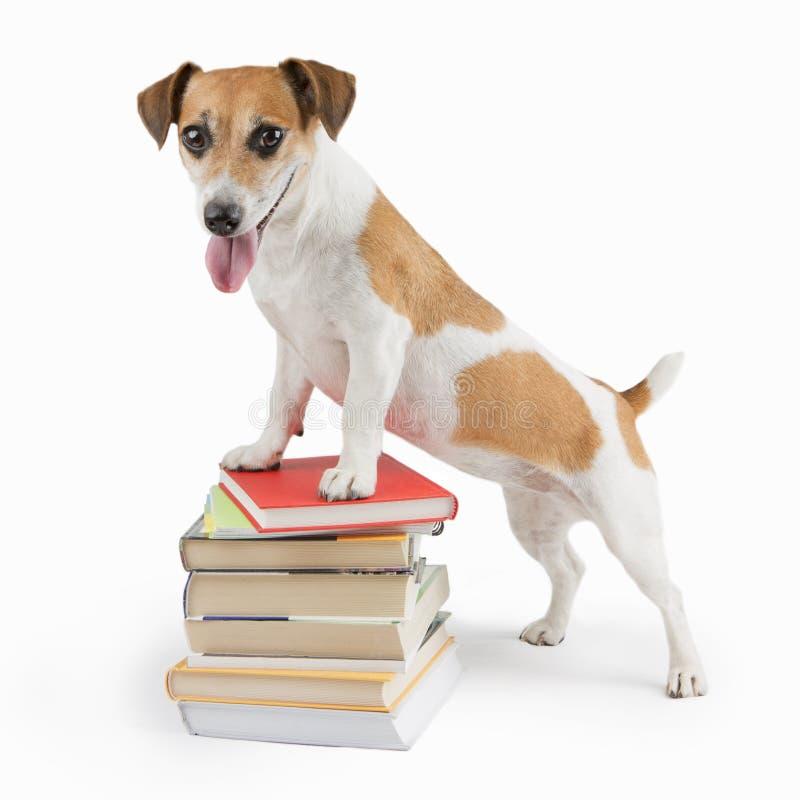 Cão feliz bonito de volta à escola foto de stock royalty free