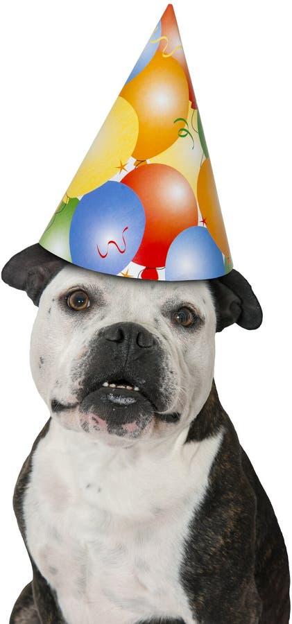 Cão feliz da festa de anos isolado imagens de stock