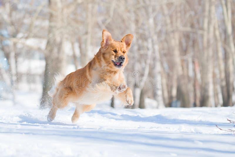 Cão feliz em um vôo foto de stock