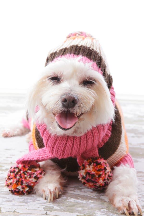Cão feliz na camisola e no lenço de lã mornos imagem de stock