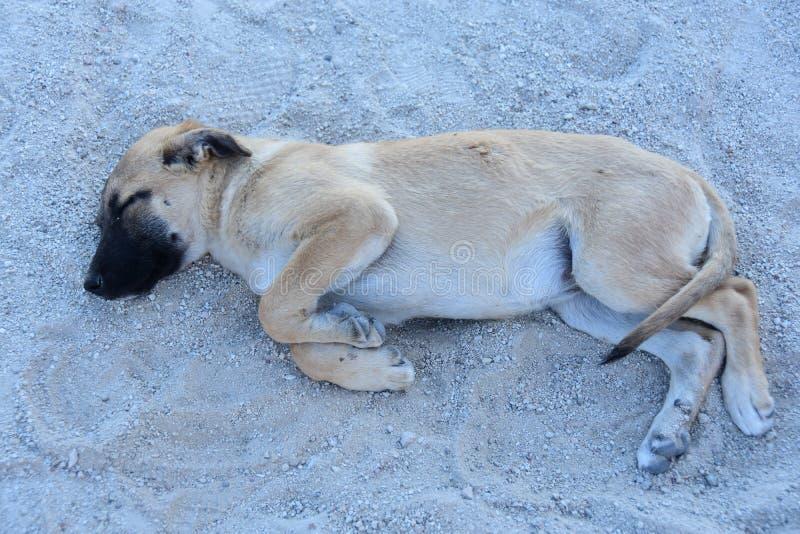 Cão feliz que dorme na jarda foto de stock