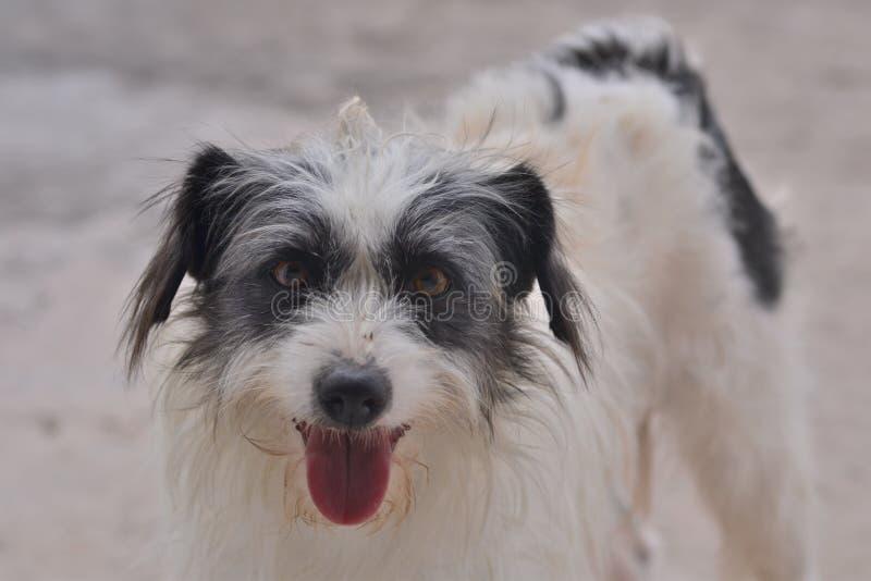 Cão feliz que olha à câmera foto de stock