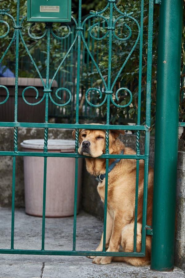 Cão furado Cão triste Proprietários de espera do cão A cidade de Kotor montenegro imagens de stock
