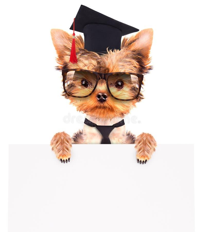 Cão graduado com bandeira fotografia de stock royalty free