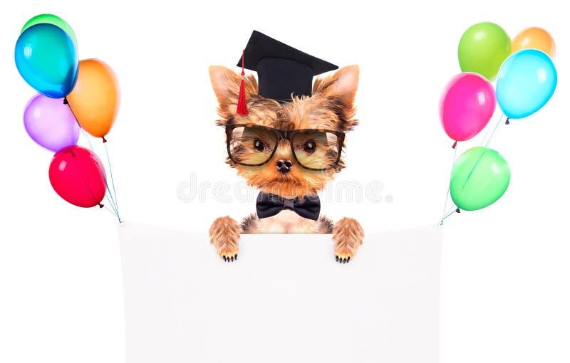 Cão graduado com bandeira imagem de stock royalty free