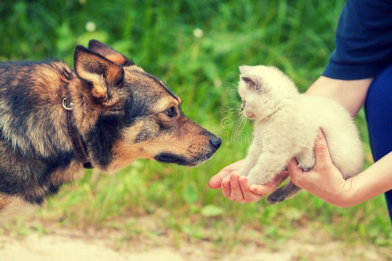 Cão grande e gatinho branco pequeno nas mãos fêmeas imagem de stock
