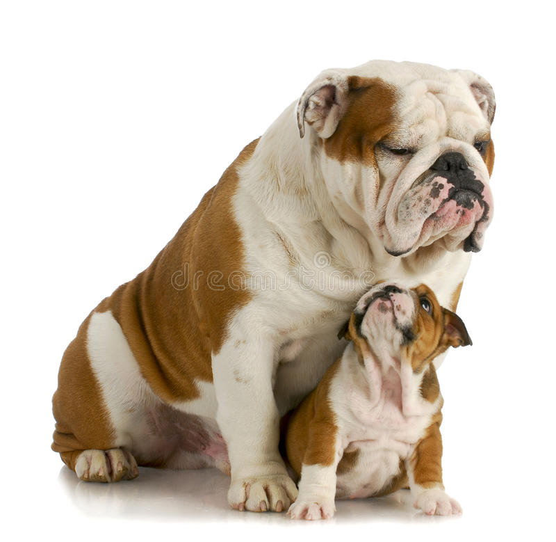 Cão grande e pequeno imagens de stock