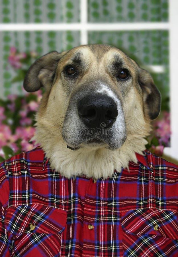 Cão humano foto de stock
