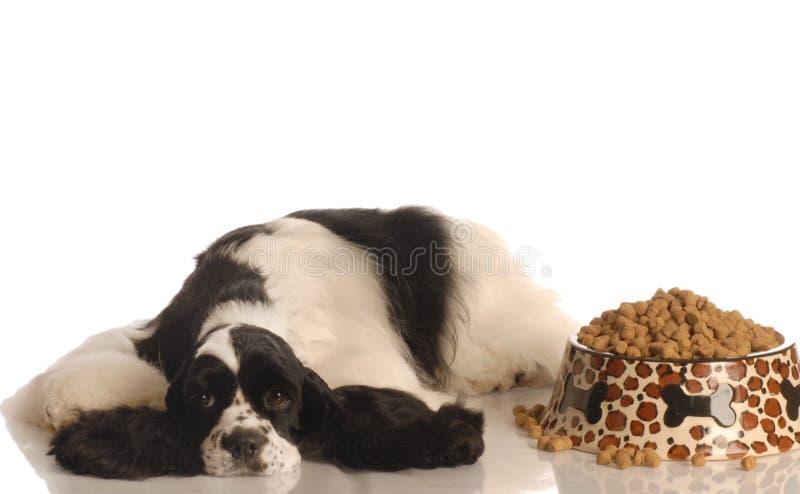 Cão infeliz com alimento fotografia de stock royalty free
