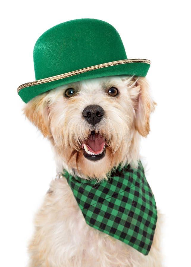 Cão irlandês feliz que comemora o dia do St Patricks foto de stock royalty free