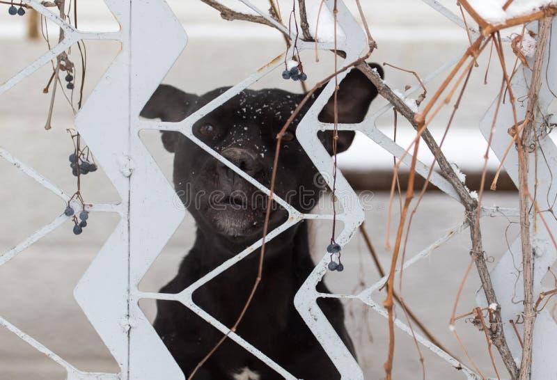 Cão irritado atrás de uma cerca imagens de stock